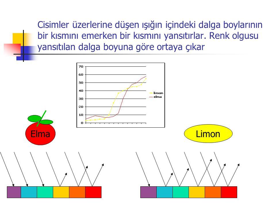 Cisimler üzerlerine düşen ışığın içindeki dalga boylarının bir kısmını emerken bir kısmını yansıtırlar. Renk olgusu yansıtılan dalga boyuna göre ortaya çıkar