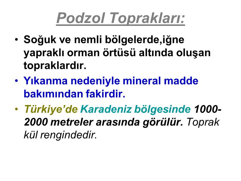 Podzol Toprakları: Soğuk ve nemli bölgelerde,iğne yapraklı orman örtüsü altında oluşan topraklardır.