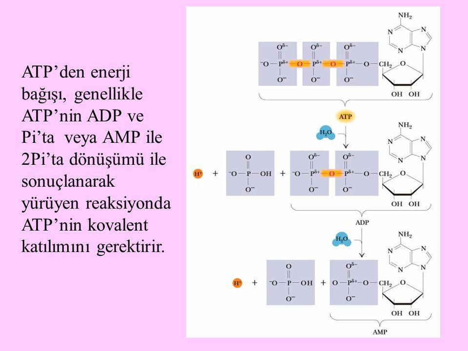 ATP'den enerji bağışı, genellikle ATP'nin ADP ve Pi'ta veya AMP ile 2Pi'ta dönüşümü ile sonuçlanarak yürüyen reaksiyonda ATP'nin kovalent katılımını gerektirir.