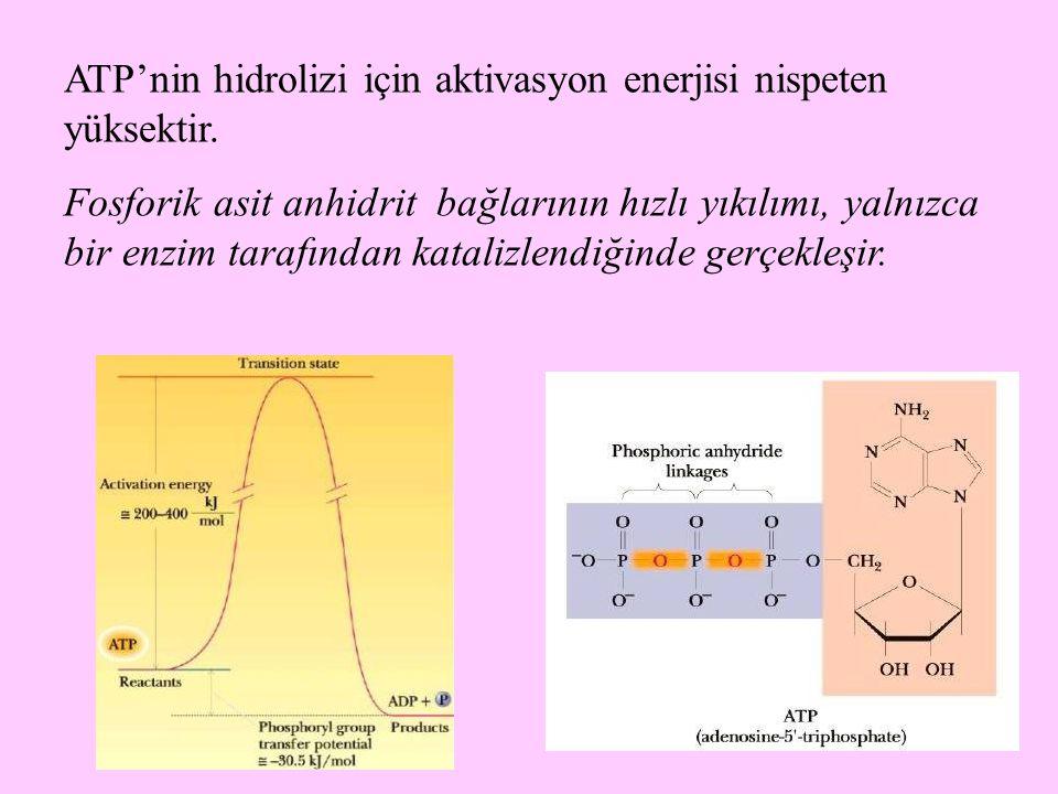 ATP'nin hidrolizi için aktivasyon enerjisi nispeten yüksektir.