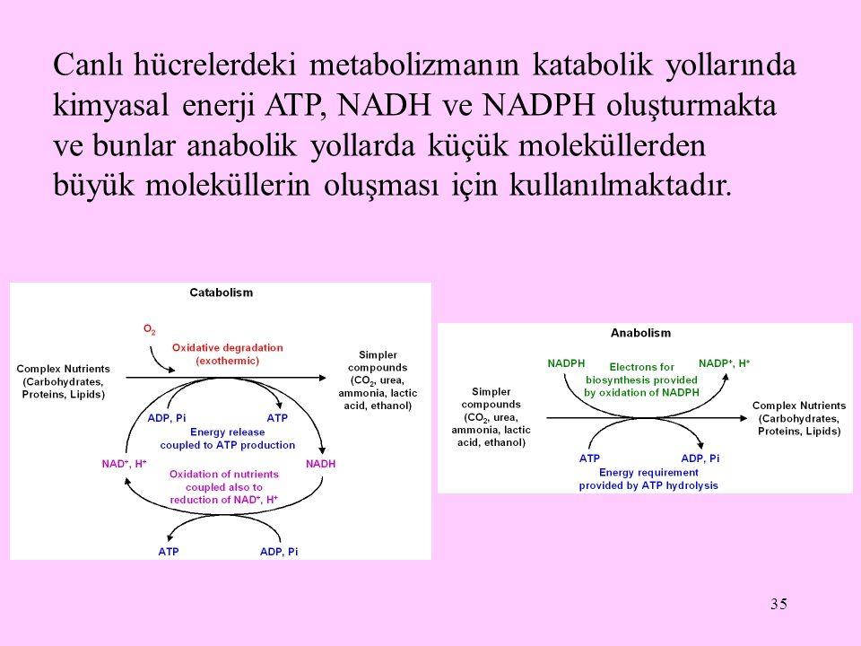 Canlı hücrelerdeki metabolizmanın katabolik yollarında kimyasal enerji ATP, NADH ve NADPH oluşturmakta ve bunlar anabolik yollarda küçük moleküllerden büyük moleküllerin oluşması için kullanılmaktadır.