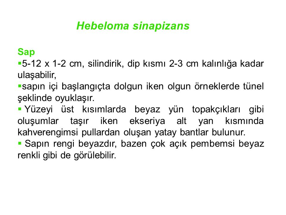 Hebeloma sinapizans Sap