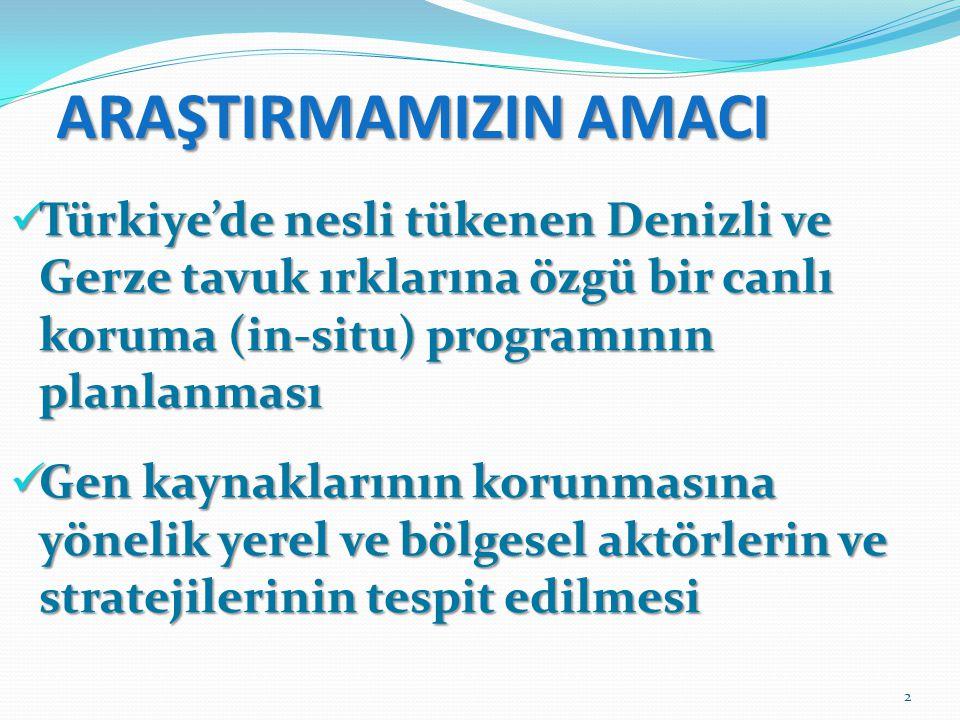 ARAŞTIRMAMIZIN AMACI Türkiye'de nesli tükenen Denizli ve Gerze tavuk ırklarına özgü bir canlı koruma (in-situ) programının planlanması.