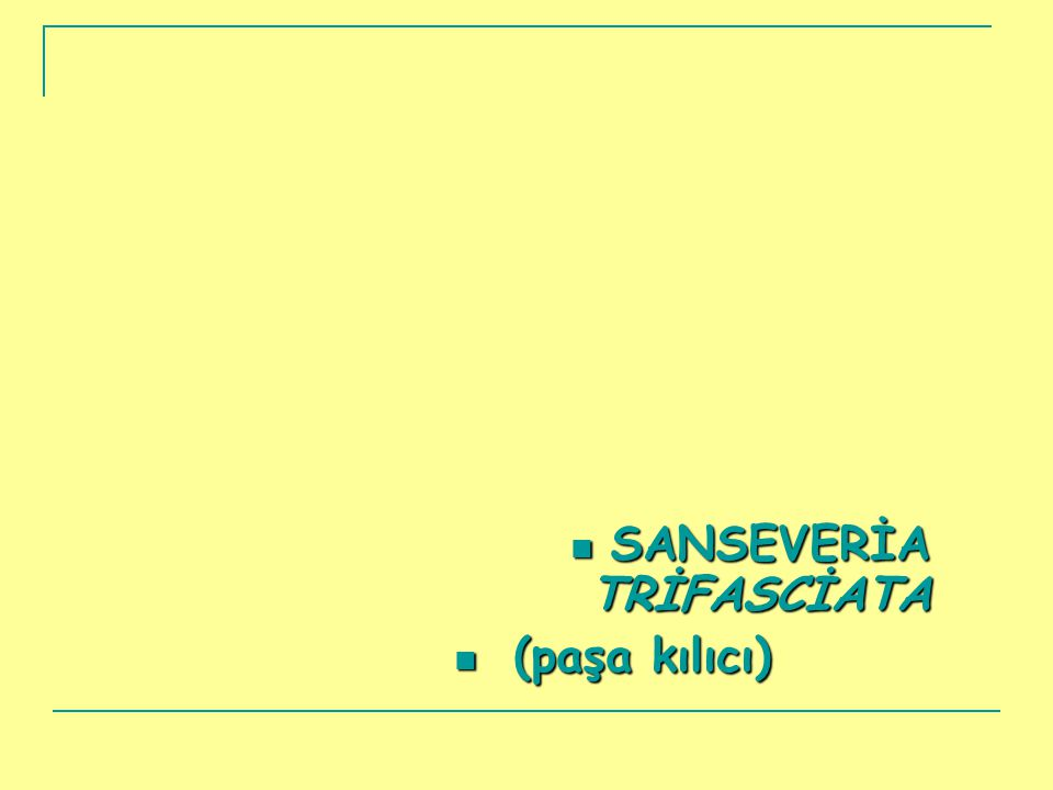 SANSEVERİA TRİFASCİATA