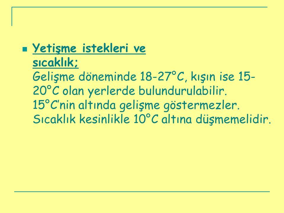 Yetişme istekleri ve sıcaklık; Gelişme döneminde 18-27°C, kışın ise 15-20°C olan yerlerde bulundurulabilir.