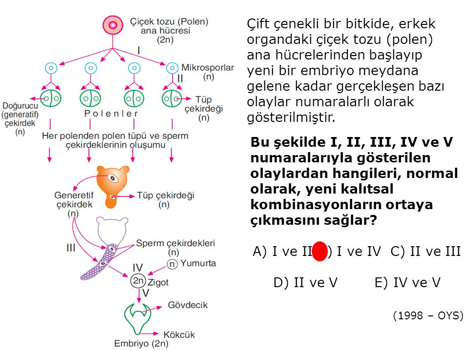 A) I ve II B) I ve IV C) II ve III