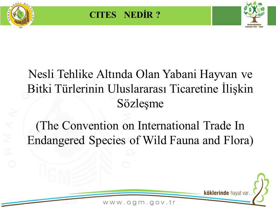 CITES NEDİR Kurumsal Kimlik. 16/12/2010. Nesli Tehlike Altında Olan Yabani Hayvan ve Bitki Türlerinin Uluslararası Ticaretine İlişkin Sözleşme.