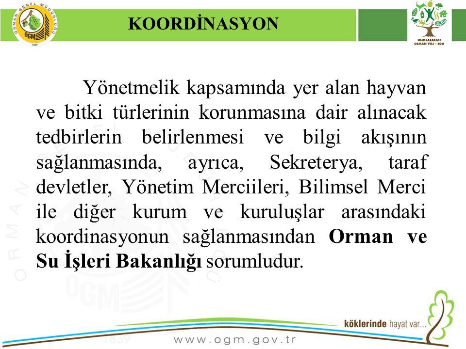 KOORDİNASYON Kurumsal Kimlik. 16/12/2010.