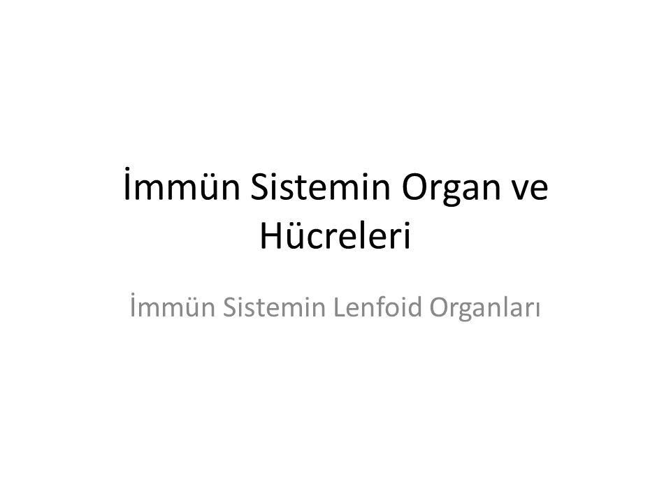 İmmün Sistemin Organ ve Hücreleri