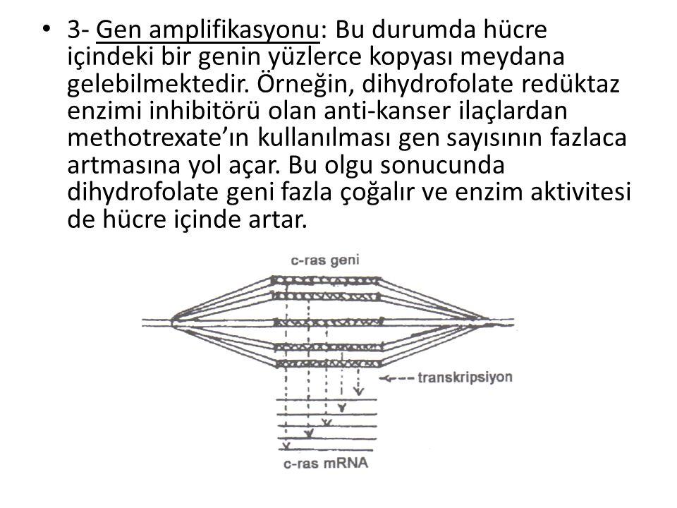 3- Gen amplifikasyonu: Bu durumda hücre içindeki bir genin yüzlerce kopyası meydana gelebilmektedir.