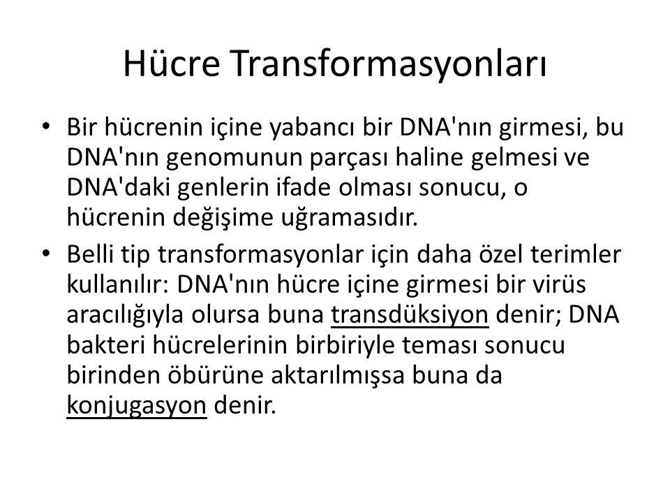 Hücre Transformasyonları