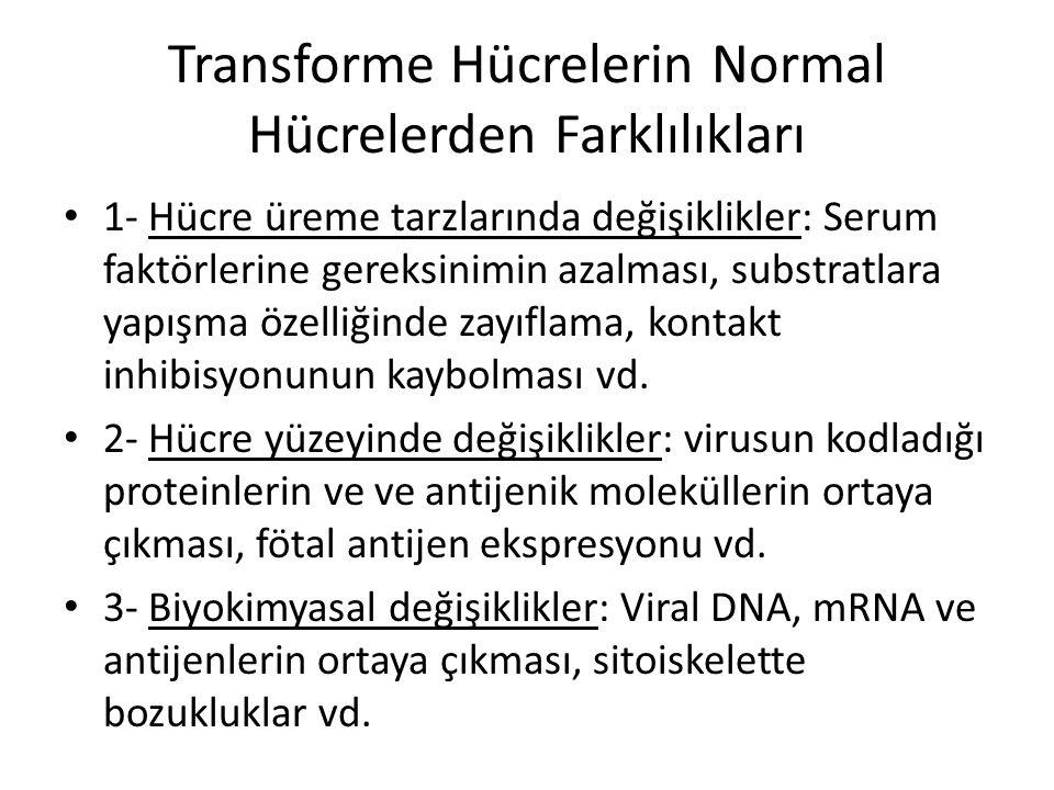Transforme Hücrelerin Normal Hücrelerden Farklılıkları