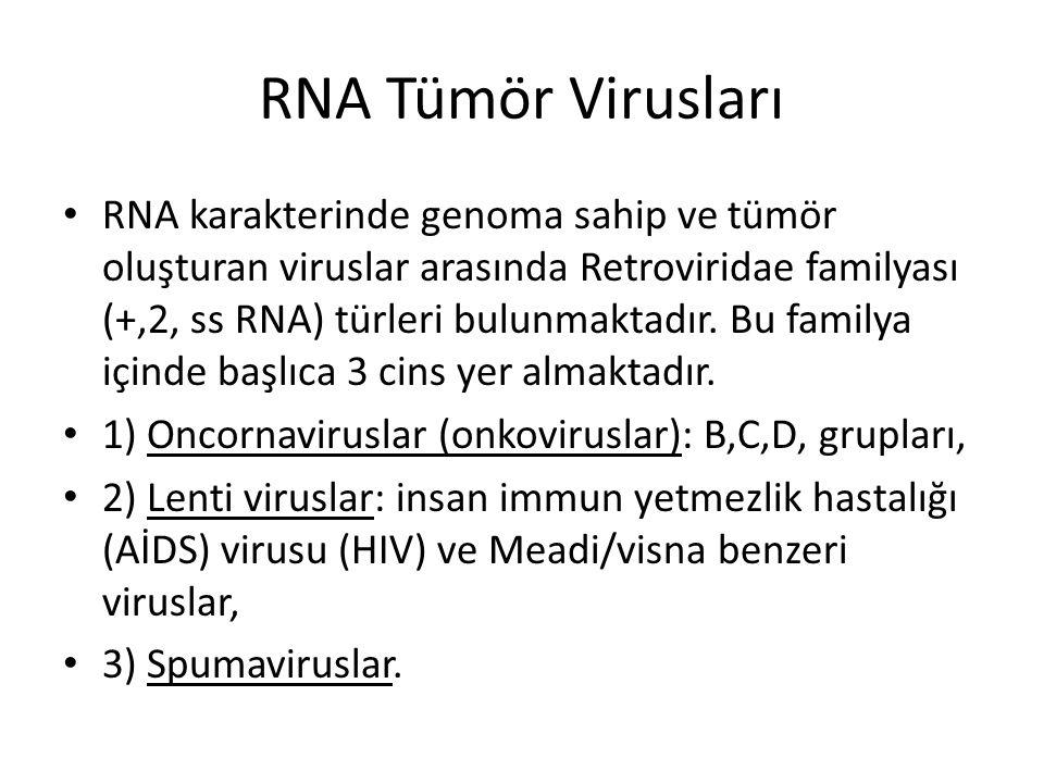 RNA Tümör Virusları