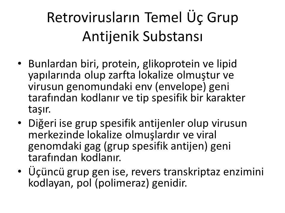 Retrovirusların Temel Üç Grup Antijenik Substansı
