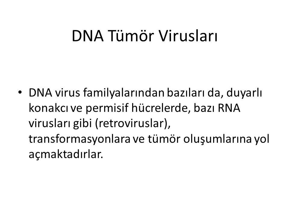 DNA Tümör Virusları