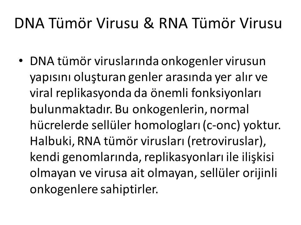 DNA Tümör Virusu & RNA Tümör Virusu