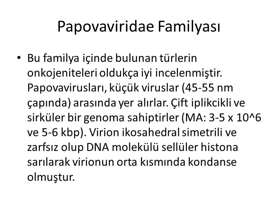 Papovaviridae Familyası