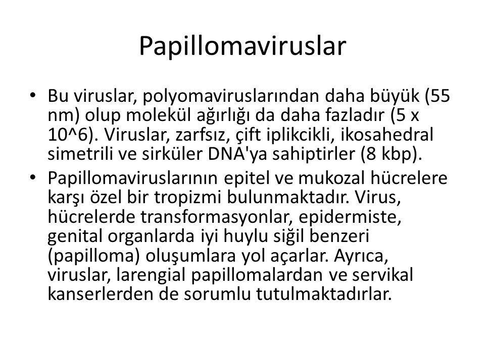 Papillomaviruslar