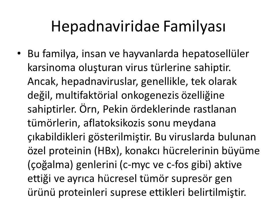Hepadnaviridae Familyası