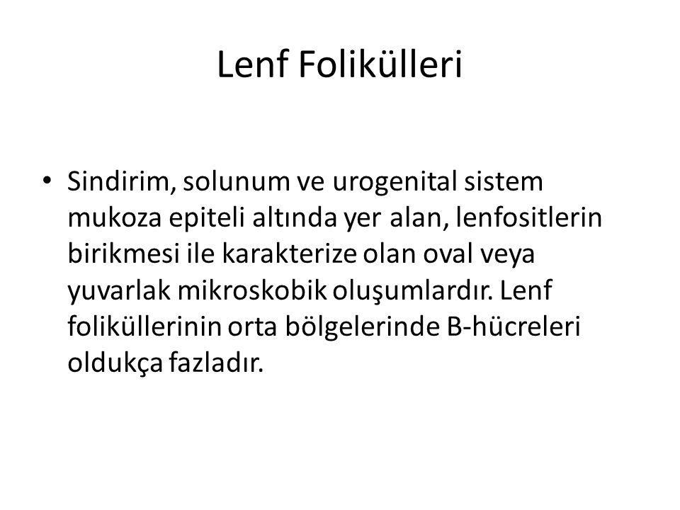 Lenf Folikülleri
