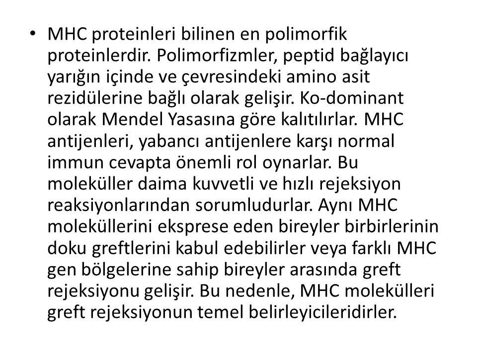 MHC proteinleri bilinen en polimorfik proteinlerdir