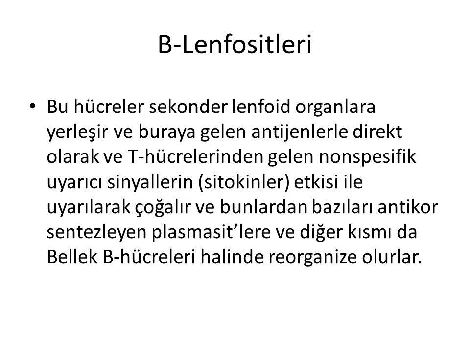 B-Lenfositleri