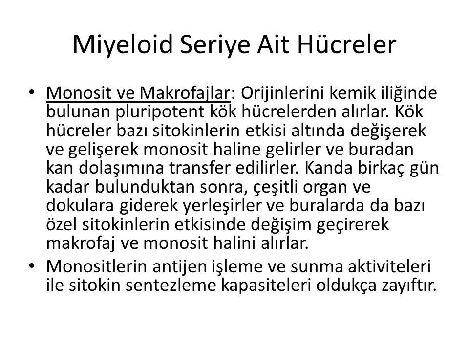 Miyeloid Seriye Ait Hücreler