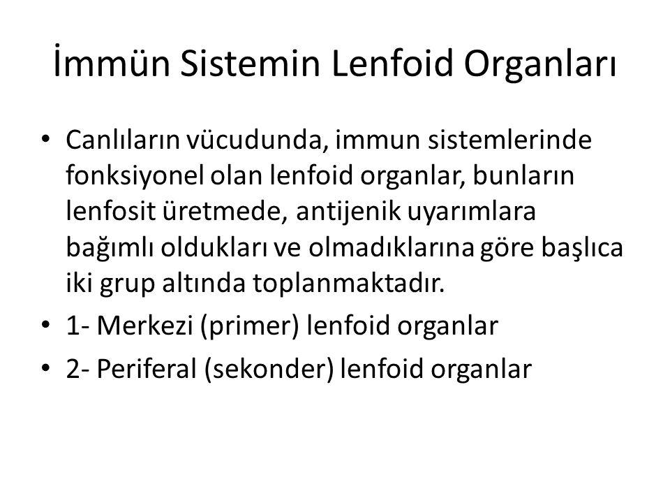 İmmün Sistemin Lenfoid Organları