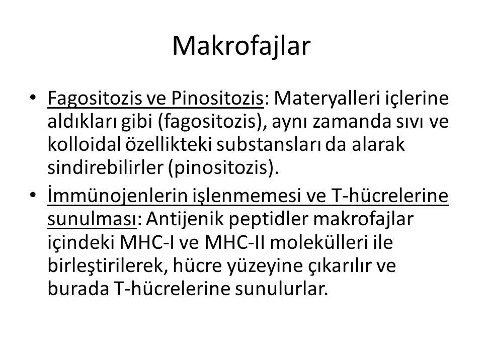 Makrofajlar