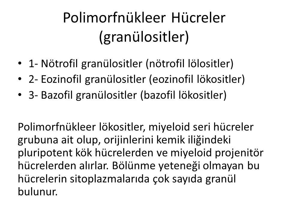 Polimorfnükleer Hücreler (granülositler)