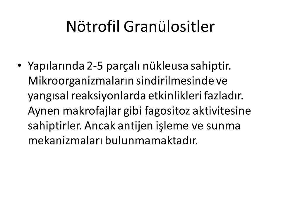 Nötrofil Granülositler
