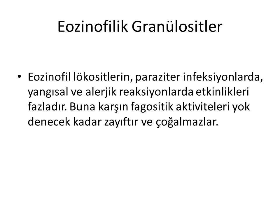 Eozinofilik Granülositler