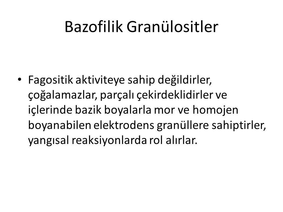 Bazofilik Granülositler