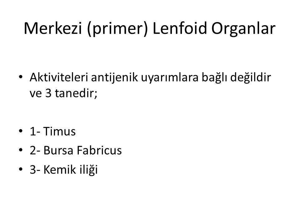 Merkezi (primer) Lenfoid Organlar