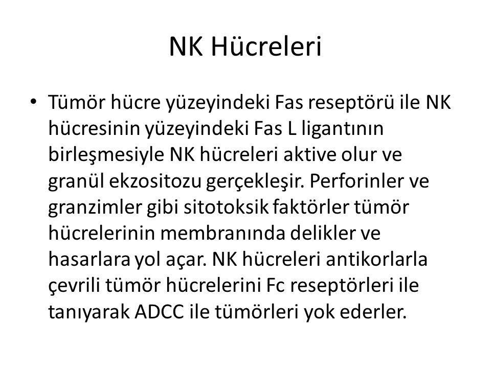 NK Hücreleri