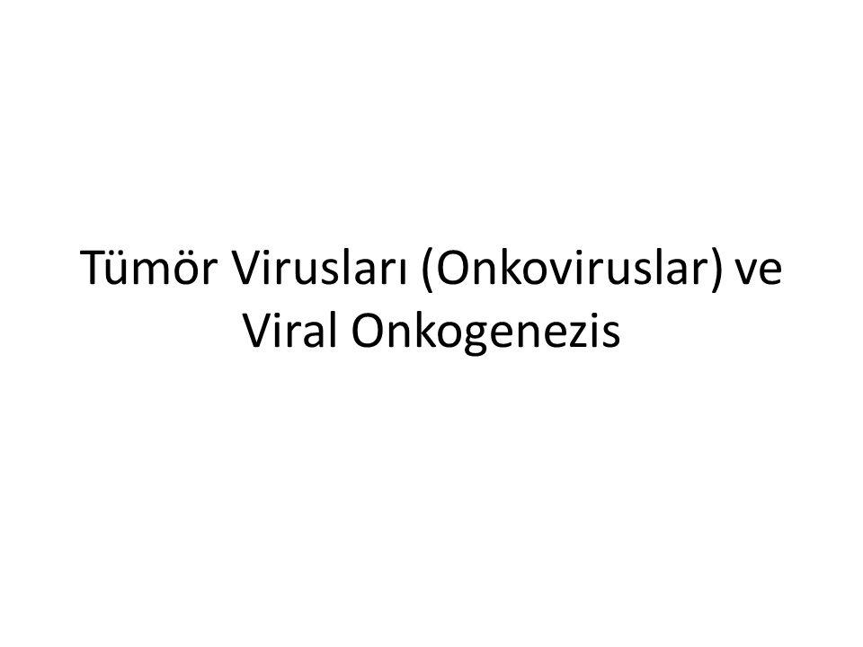 Tümör Virusları (Onkoviruslar) ve Viral Onkogenezis