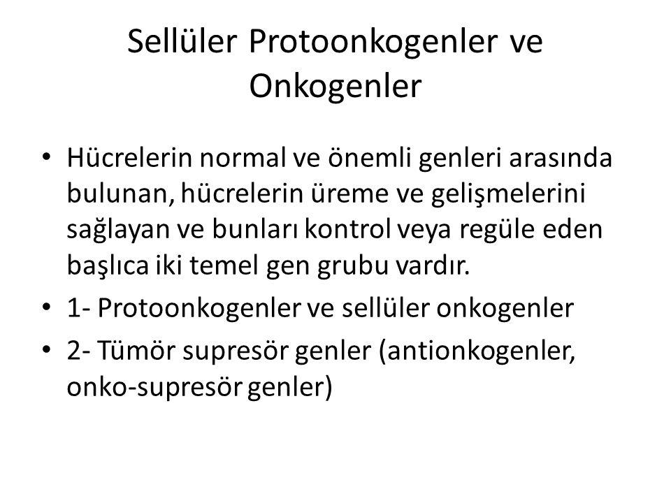 Sellüler Protoonkogenler ve Onkogenler
