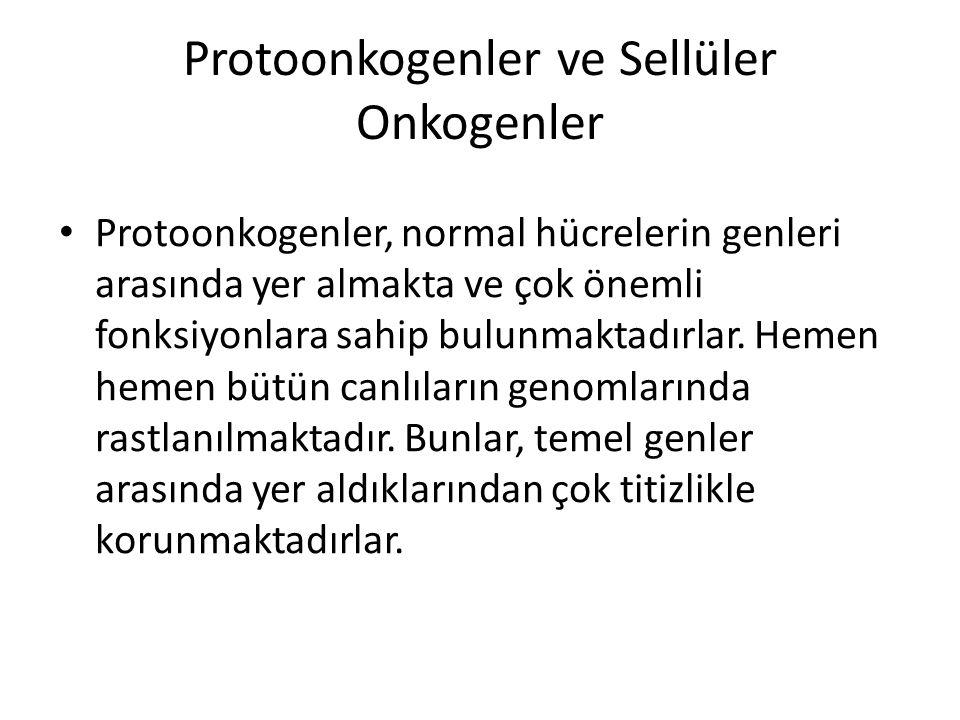 Protoonkogenler ve Sellüler Onkogenler