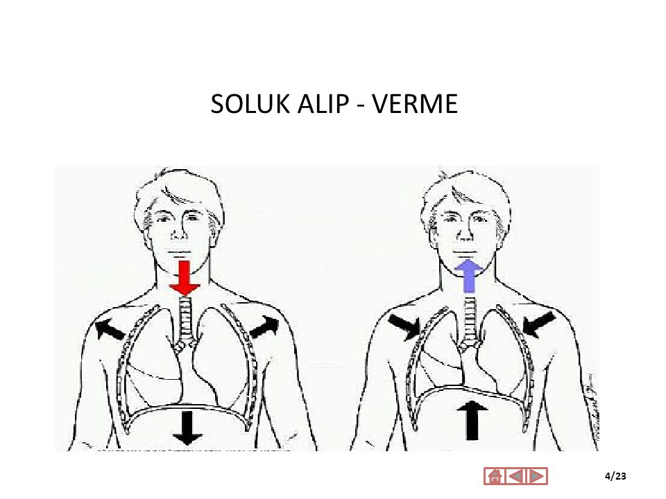 SOLUK ALIP - VERME