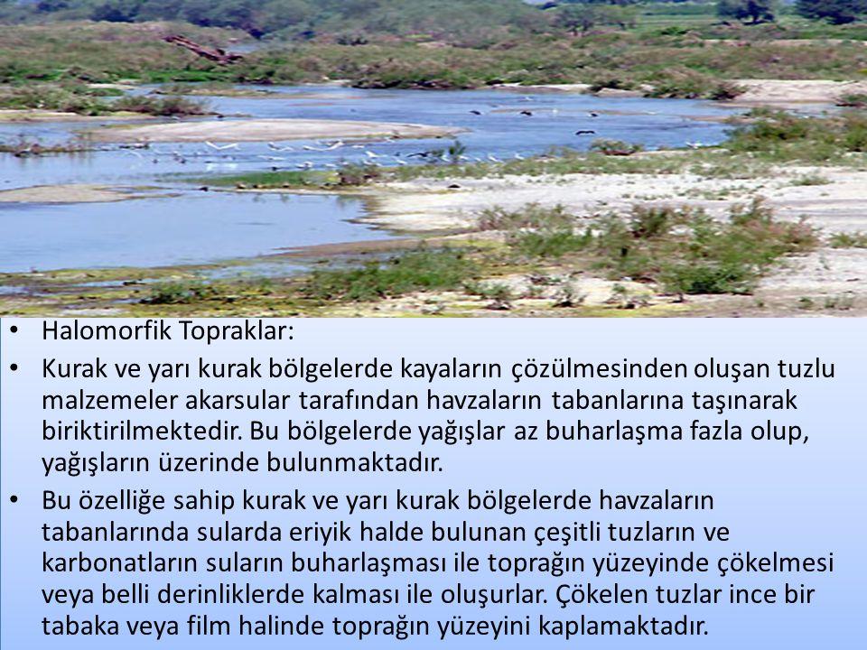 Halomorfik Topraklar: