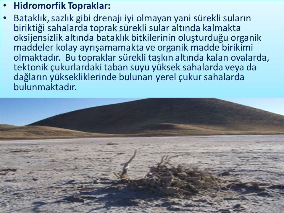 Hidromorfik Topraklar: