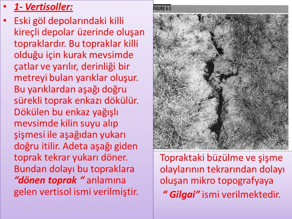 1- Vertisoller: