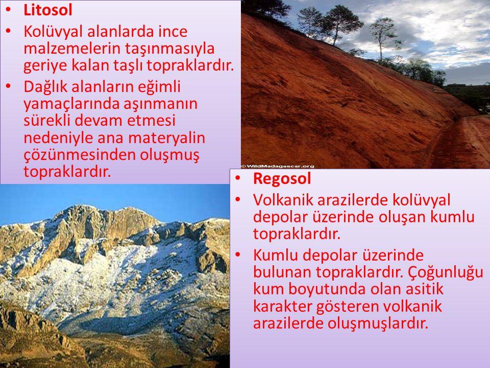 Litosol Kolüvyal alanlarda ince malzemelerin taşınmasıyla geriye kalan taşlı topraklardır.