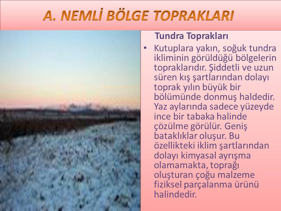 A. NEMLİ BÖLGE TOPRAKLARI