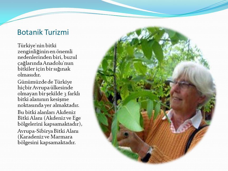 Botanik Turizmi Türkiye nin bitki zenginliğinin en önemli nedenlerinden biri, buzul çağlarında Anadolu nun bitkiler için bir sığınak olmasıdır.