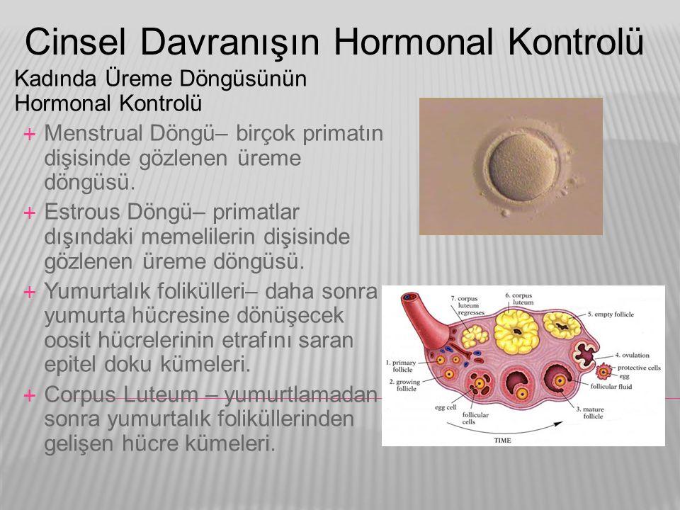 Cinsel Davranışın Hormonal Kontrolü