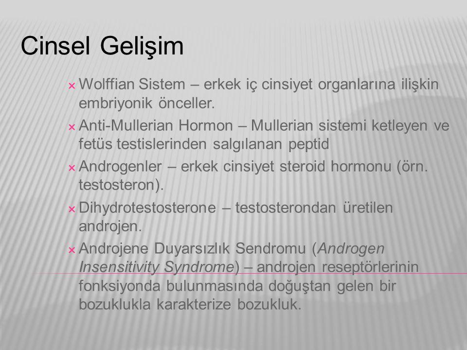 Cinsel Gelişim Wolffian Sistem – erkek iç cinsiyet organlarına ilişkin embriyonik önceller.
