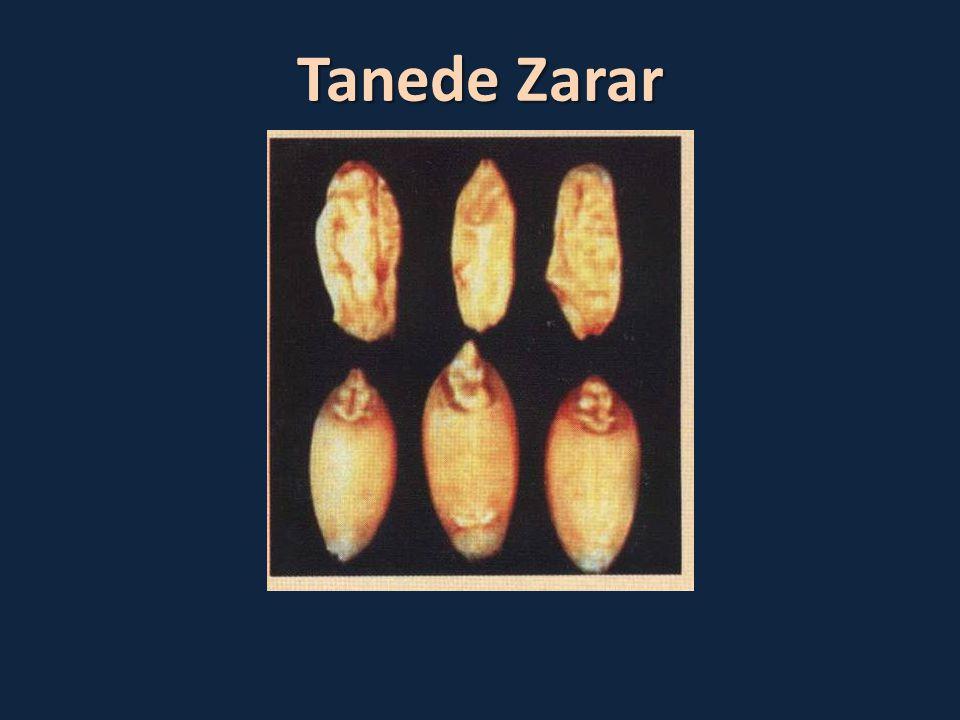 Tanede Zarar