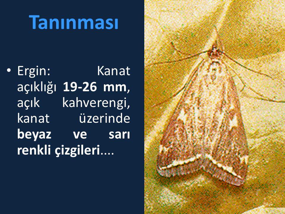Tanınması Ergin: Kanat açıklığı 19-26 mm, açık kahverengi, kanat üzerinde beyaz ve sarı renkli çizgileri....