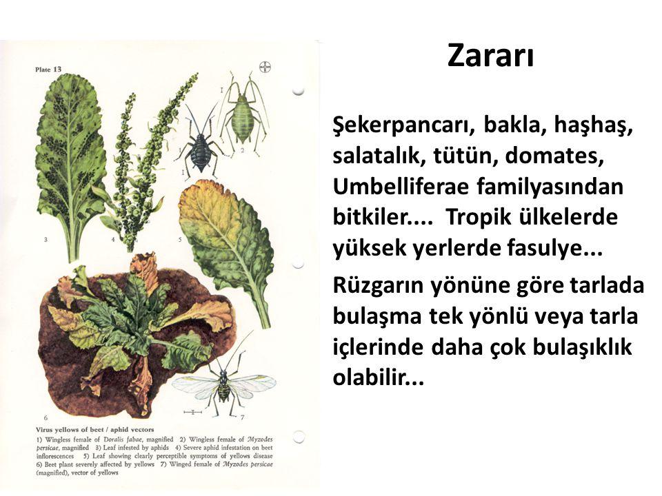 Zararı Şekerpancarı, bakla, haşhaş, salatalık, tütün, domates, Umbelliferae familyasından bitkiler.... Tropik ülkelerde yüksek yerlerde fasulye...